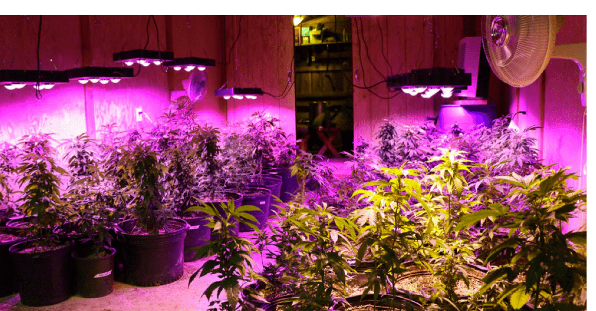 How Can An LED Plant Light Help Your Plants To Grow?