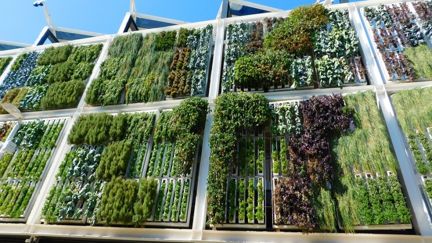 Vital Things To Learn About Vertical Gardening
