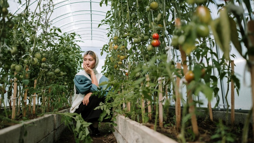 How To Choose The Best Location For Your Vegetable Garden?